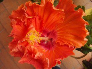full blom